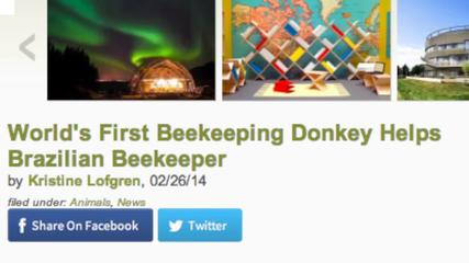 News video: World's First Donkey Beekeeper